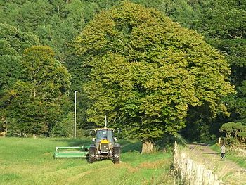 English: Harvest at Ardgowan While most of the...